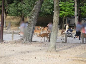 奈良公園 鹿 .jpg